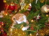 And a cat in the Christmas tree