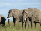 Safari Trip to Maasai Mara National Park