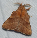 Tent Caterpillars and Lappet Moths (Family: Lasiocampidae) 7670 to 7701