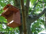 Grey squirrel house
