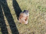 Groundhog looking for handouts