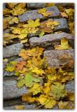 Leaves On Cobblestones