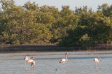 43-DSC_1491-Flamingoes.jpg