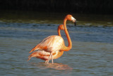 48-DSC00174-Flamingoes.jpg