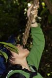 Water liana