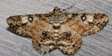 Moth 33
