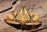 Moth 35