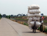 Over half a ton/tonne (I estimate 600kg) of rice on a bike