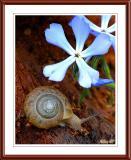 _DSC0168_Snail.jpg