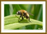 _DSC0091_Bee.jpg