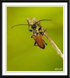 _DSC0091Beetle Species.jpg