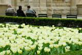 water tower tulips.jpg