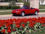 Miata Tulips.jpg