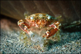 Crab eating whatever fell on the bottom