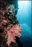 Pulau Babi wall