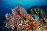 Panga batang reef 1