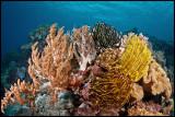 Panga batang reef 3