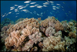 Panga batang reef scenery