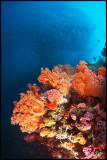 Pescador reefscape 1