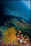 Pescador under the sardine run 1