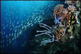 Pescador reefscape 4