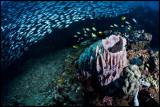 Pescador under the sardine run 3