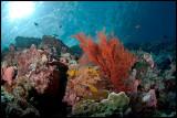 Tatawa Besar Reefscape 5