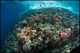 Batu Bolong Reefscape 1
