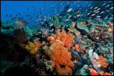 Tatawa Besar Reefscape 3