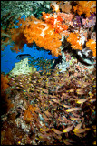 Tatawa Besar Reefscape 4
