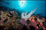 Tatawa Besar reefscape 6