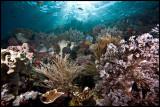 Batu Bolong Reefscape 2