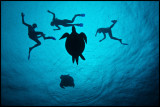 Turtles and snorkelers