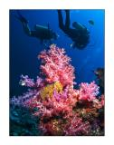 Reef colors