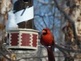cardinal on lighthouse
