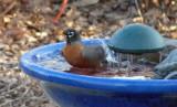 robin makes waves
