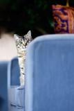 Gato en sofa