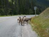2009 Banff/Jasper/Kootenay/Yoho