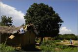Bamako, île sur le Niger #08