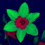 UV-VIS-NIR_SDIM3089 B- ck2.jpg
