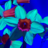 UV-VIS-NIR_SDIM3117 UA85 Ms ck2.jpg
