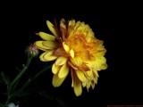N35_V_B171934_c.jpg