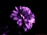 N35_UV_B171925_c.jpg