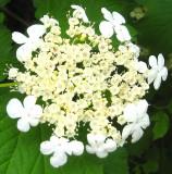 Unknown Pretty Flower