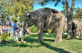 Three Elephants...
