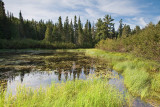 2T1U6039.jpg - Algonquin Provincial Park, ON, Canada