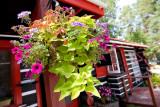 2T1U6401.jpg - Algonquin Provincial Park, ON, Canada