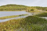 2T1U6554.jpg - Algonquin Provincial Park, ON, Canada
