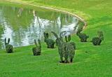 Topiary bunnies