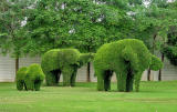 Topiary elephants